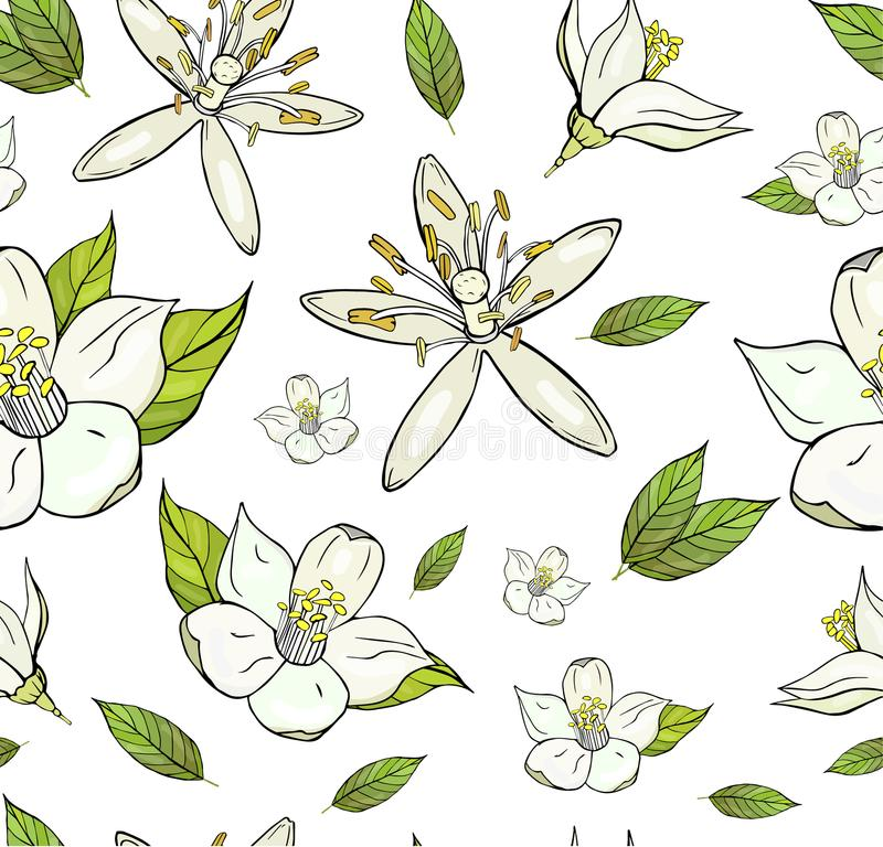 Seamless pattern with lemon flowers and leafs royalty free illustration
