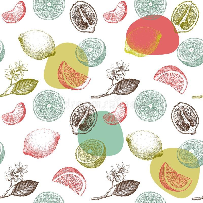 Seamless pattern with lemons, oranges and mandarins. Hand drawn illustration royalty free illustration