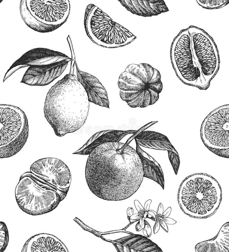 Seamless pattern with lemons, oranges and mandarins. Hand drawn illustration stock illustration
