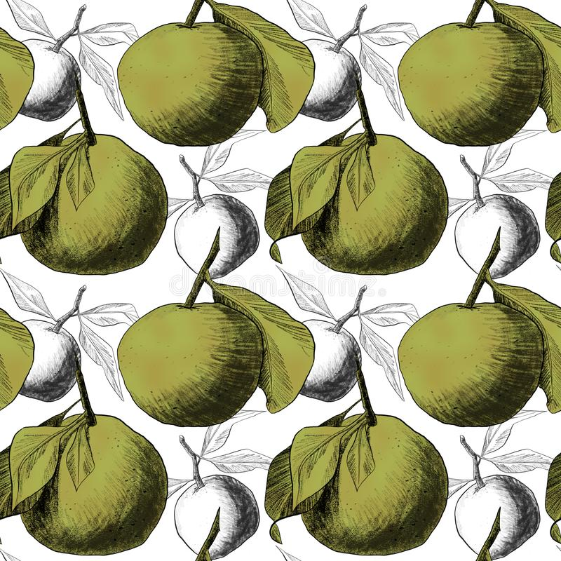 Seamless pattern: mandarins or apples, unique pencil drawings of fruits combined into beautiful compositions. Green on white background with transparent stock illustration