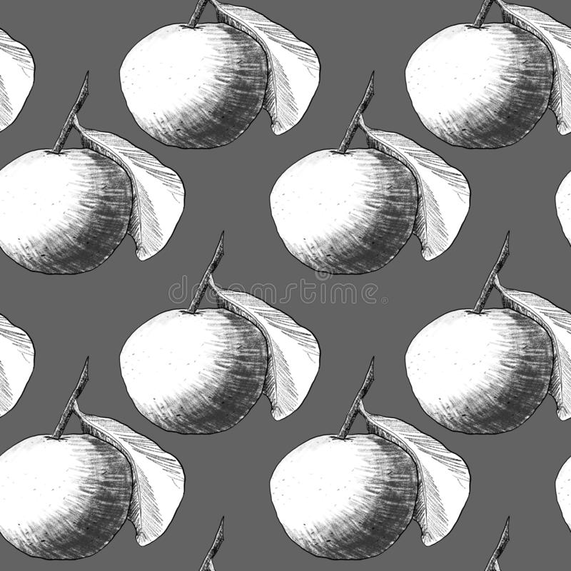 Seamless pattern: mandarins or apples, unique pencil drawings of fruits combined into beautiful compositions. White on gray background stock illustration