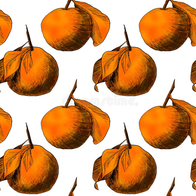 Seamless pattern: mandarins or apples, unique pencil drawings of fruits combined into beautiful compositions. Orange on white background vector illustration