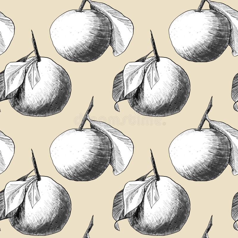 Seamless pattern: mandarins or apples, unique pencil drawings of fruits combined into beautiful compositions. White on beige background stock illustration
