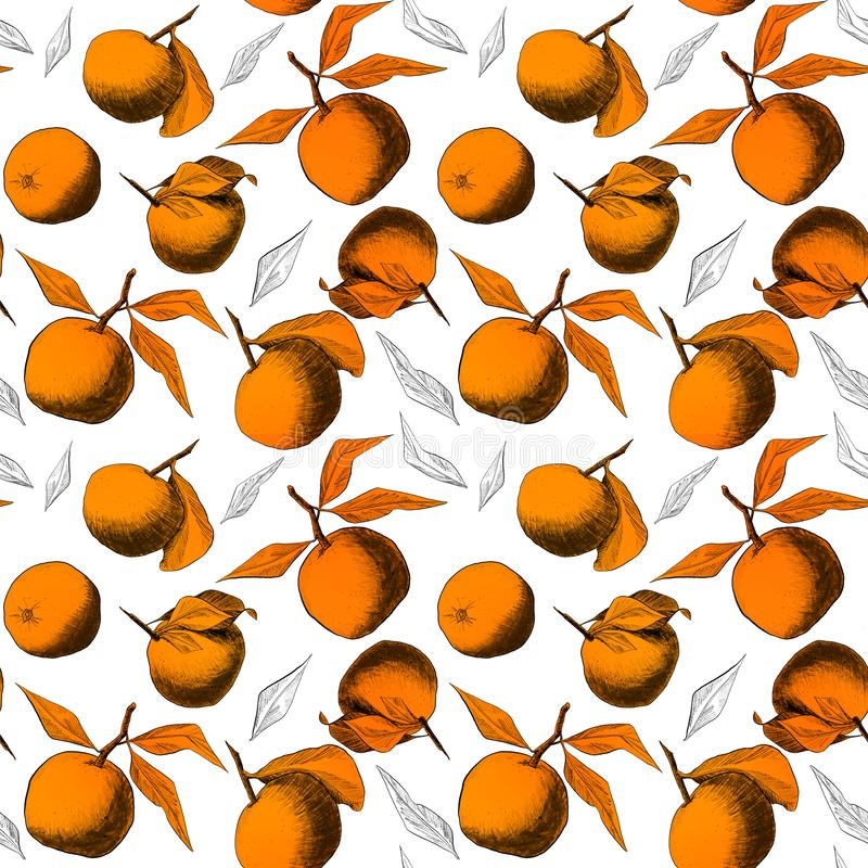 Seamless pattern: mandarins or apples, unique pencil drawings of fruits and leafs combined into beautiful compositions. Orange on white background royalty free illustration