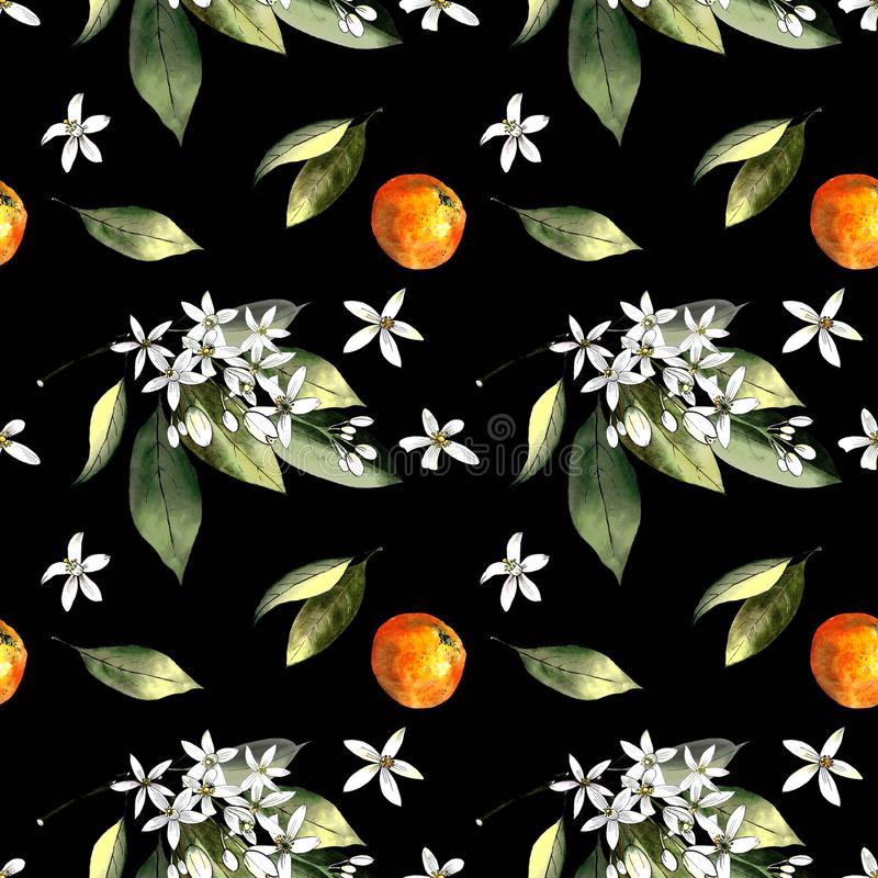 Seamless pattern with mandarins and leaves and flowers on black background. Drawing markers. Seamless pattern with mandarins and leaves. Hand draw royalty free illustration
