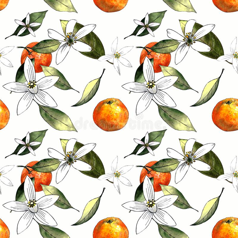 Seamless pattern with mandarins and leaves and flowers on white background. Drawing markers. Seamless pattern with mandarins and leaves. Hand draw stock illustration