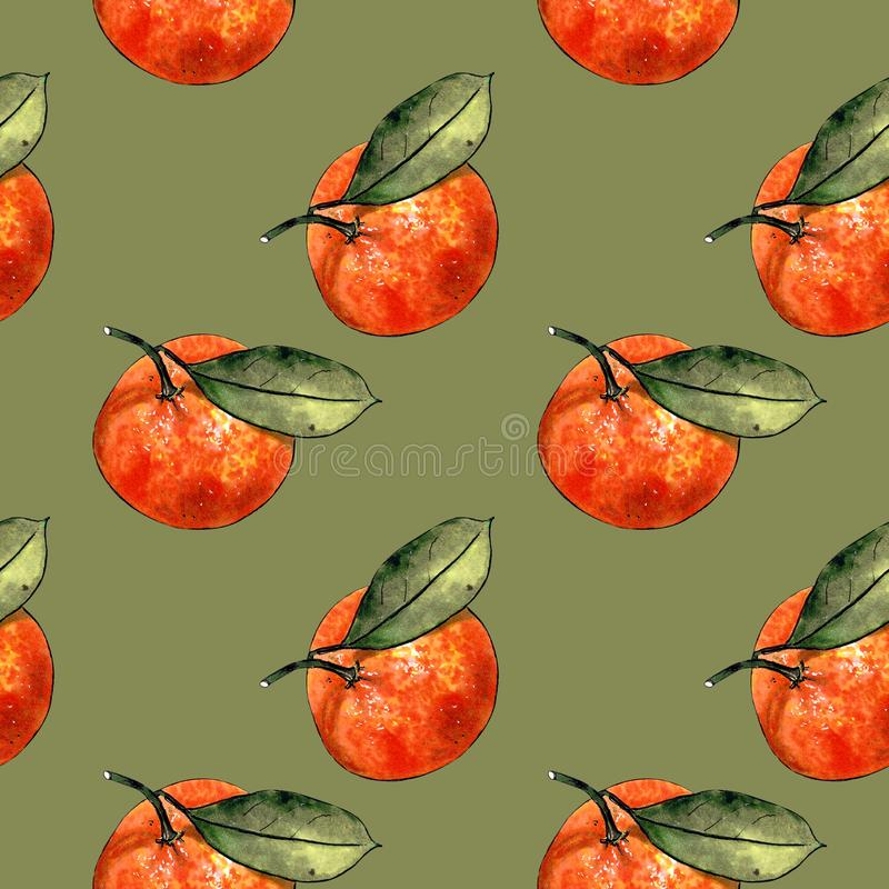 Seamless pattern with mandarins and leaves on green background. Drawing markers. Seamless pattern with mandarins and leaves. Hand draw royalty free illustration
