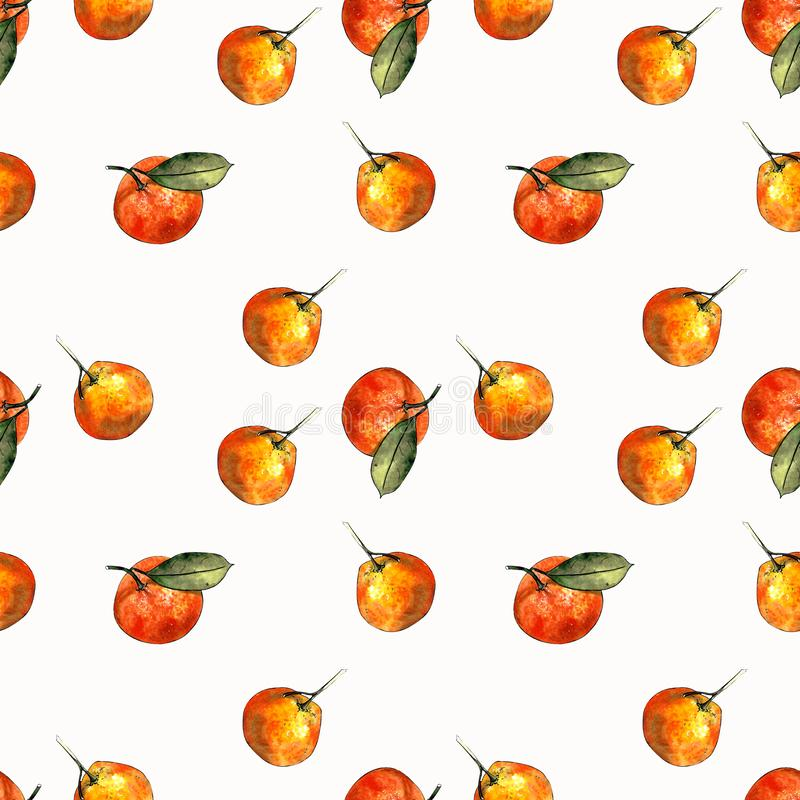 Seamless pattern with mandarins and leaves on white background. Drawing markers. Seamless pattern with mandarins and leaves. Hand draw royalty free illustration