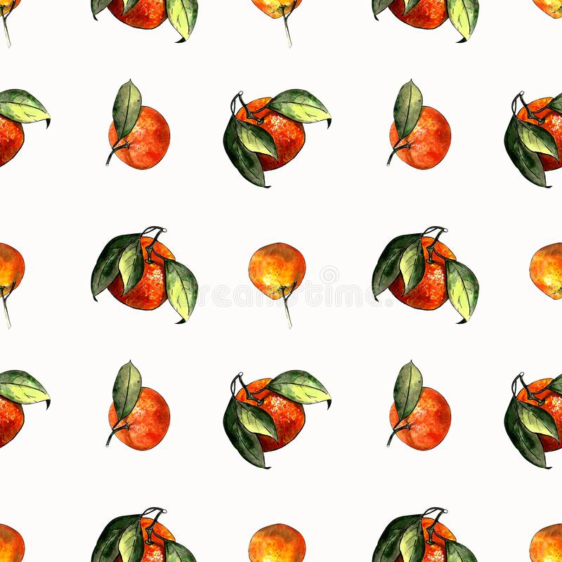 Seamless pattern with mandarins and leaves on white background. Drawing markers. Seamless pattern with mandarins and leaves. Hand draw stock illustration
