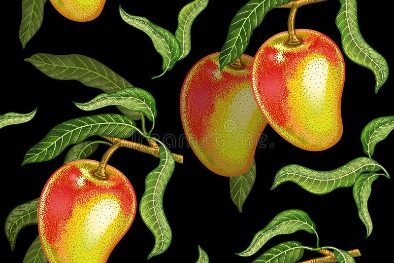 Vintage seamless pattern with mango. Seamless pattern with mango. Realistic vector illustration plant. Hand drawing with colored pencils. Fruit, leaf, branch of vector illustration