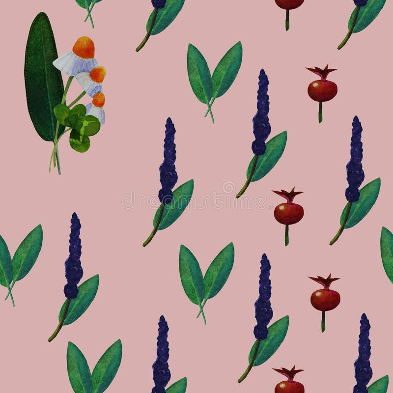 Seamless pattern with medicinal plants, pink background. Seamless pattern with hand-drawn watercolor illustrations of sage, camomile, rose hips fruits stock illustration
