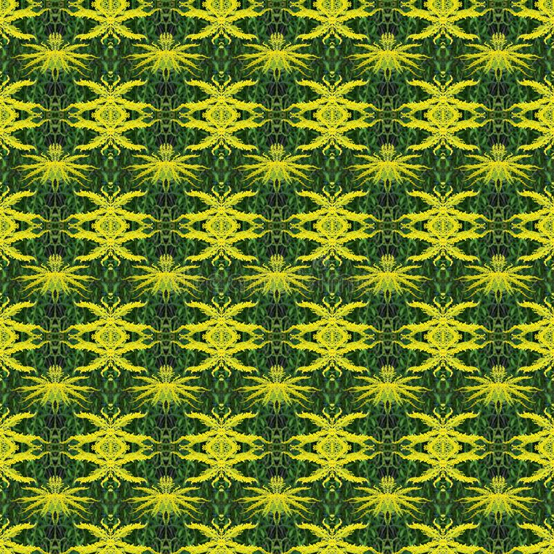 seamless pattern natural photo flower Mimosa. yellow-green colo royalty free stock image