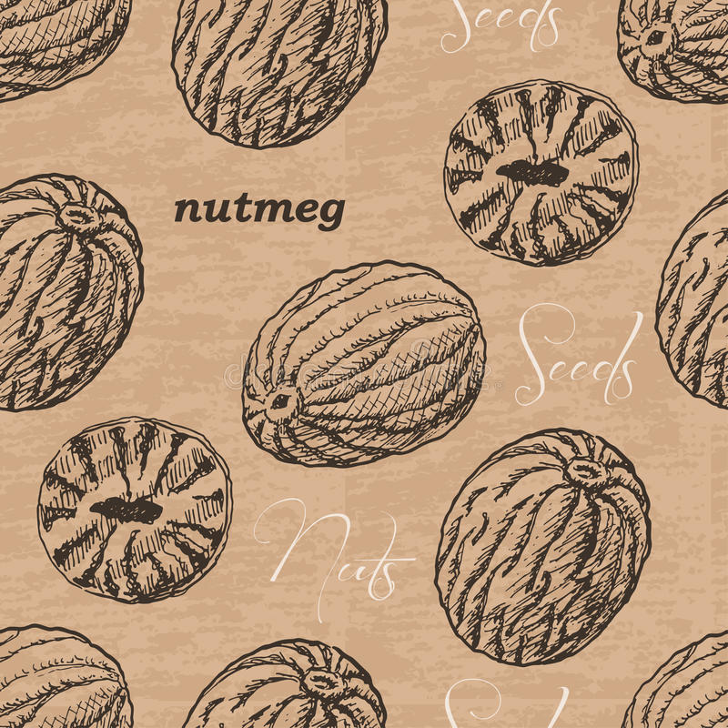 Seamless pattern with nutmeg on a vintage background. Vector illustration for your design stock illustration