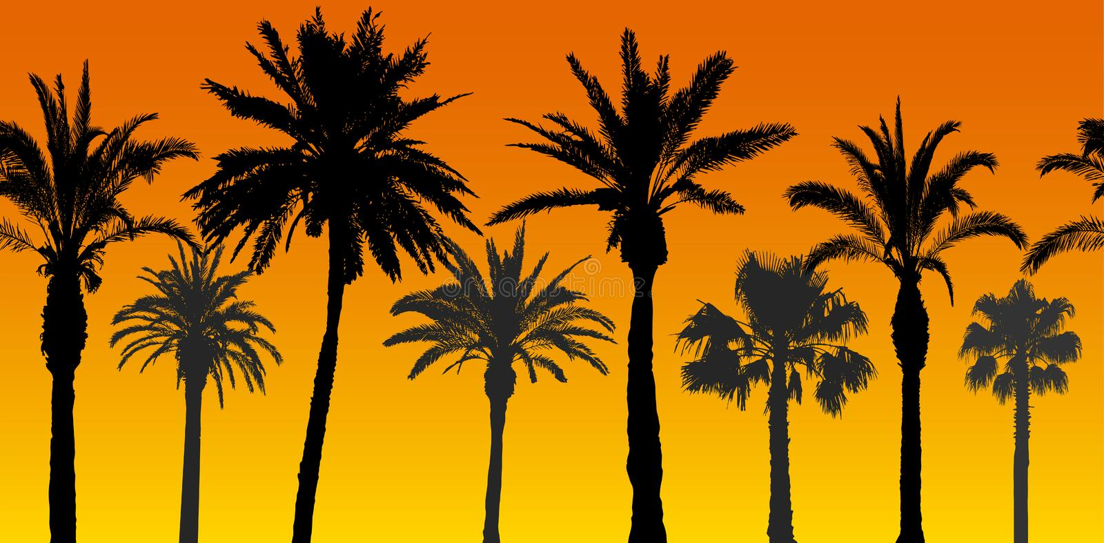 Seamless pattern of palm trees silhouettes at sunrise, vector illustration.  vector illustration