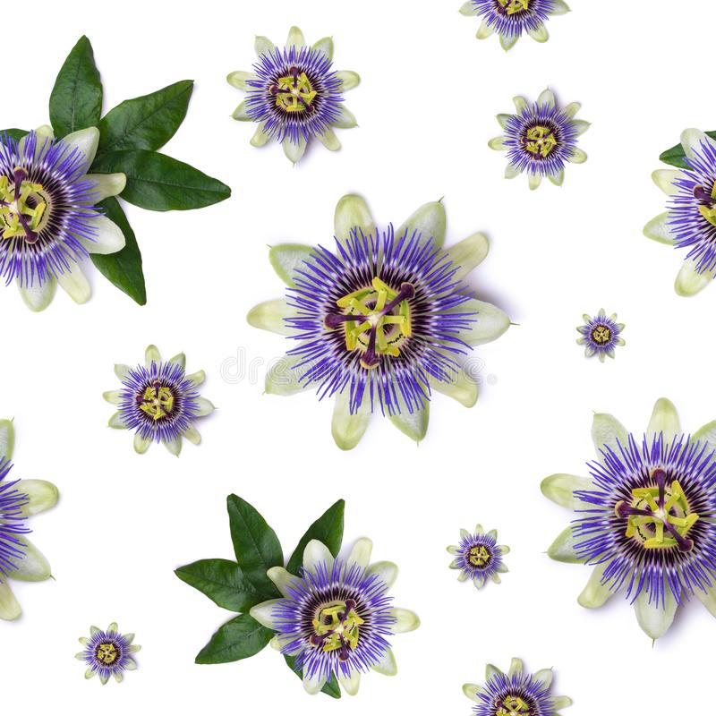 Seamless pattern with Passiflora passionflower on white background. Seamless pattern with Passiflora passionflower on white background stock images