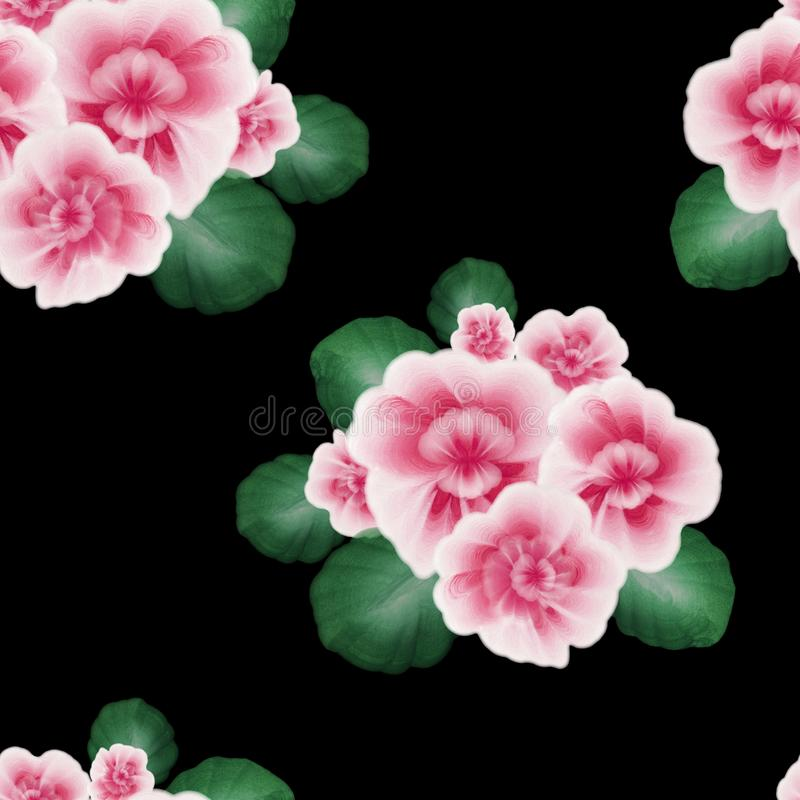 A seamless pattern with pink African violet, viola flowers on the black background. A floral pattern with gouache one stroke paint stock illustration