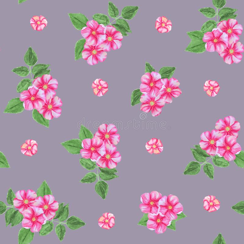 Seamless pattern of pink rosehip flowers isolated on a grey background. vector illustration