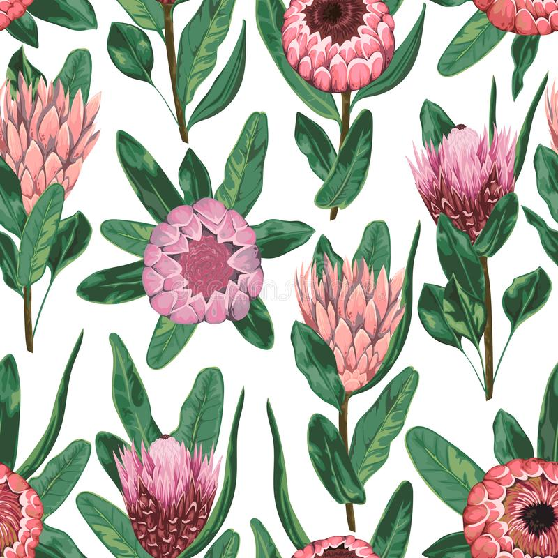 Seamless pattern with protea flowers, buds and leaves. Decorative holiday floral background. vector illustration