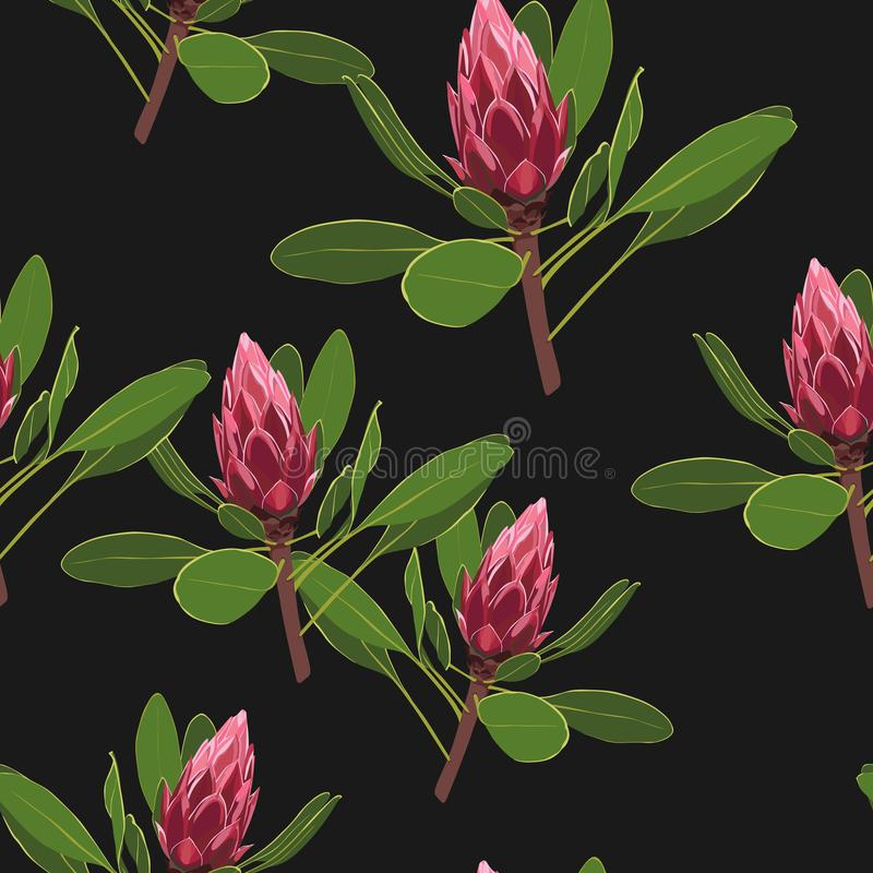 Seamless pattern with protea flowers with leaves. Decorative holiday floral background. Vintage vector illustration royalty free illustration