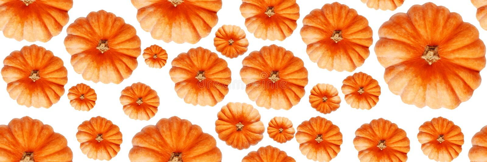 Seamless pattern with pumpkin. Abstract background. Pumpkins isolated on white background. Banner. Top view. Seamless pattern with pumpkin. Abstract background stock image