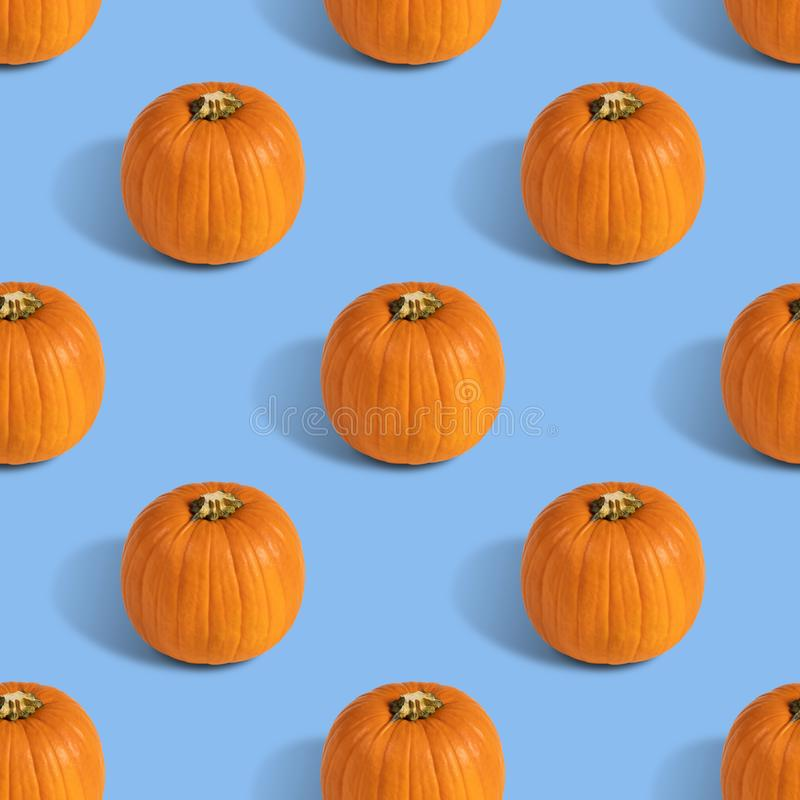 Seamless pattern with pumpkin on blue background. Autumn abstract background. Minimal vegetable concept.  royalty free stock photos