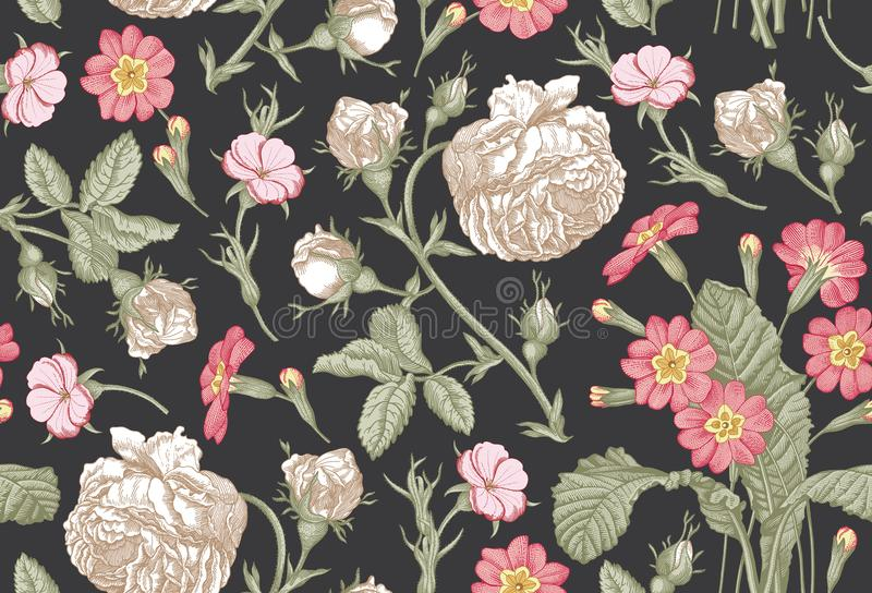 Seamless pattern. Realistic isolated flowers. Vintage background. Rose primrose Primula Wallpaper. Drawing engraving. Seamless pattern. Beautiful pink blooming royalty free illustration