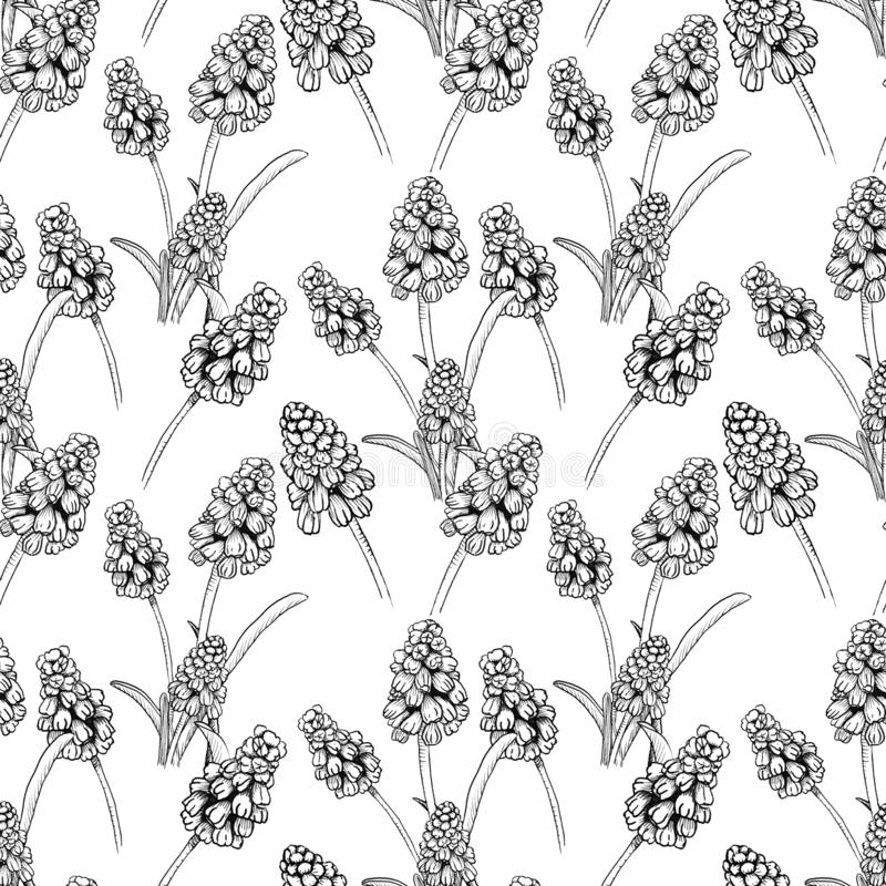 Seamless pattern with realistically painted ink Muscari flowers. Hand drawn illustration on white background modified to. Digital source for modern disign royalty free illustration