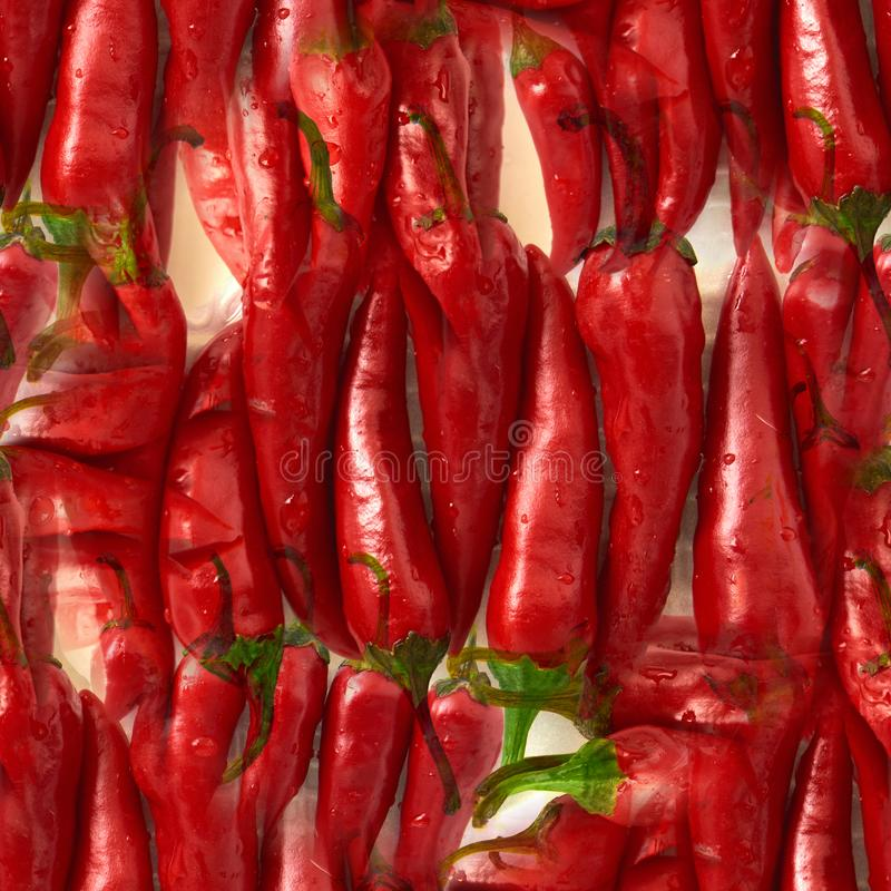 seamless pattern Red Chili pepper. isolated on white background royalty free stock photos