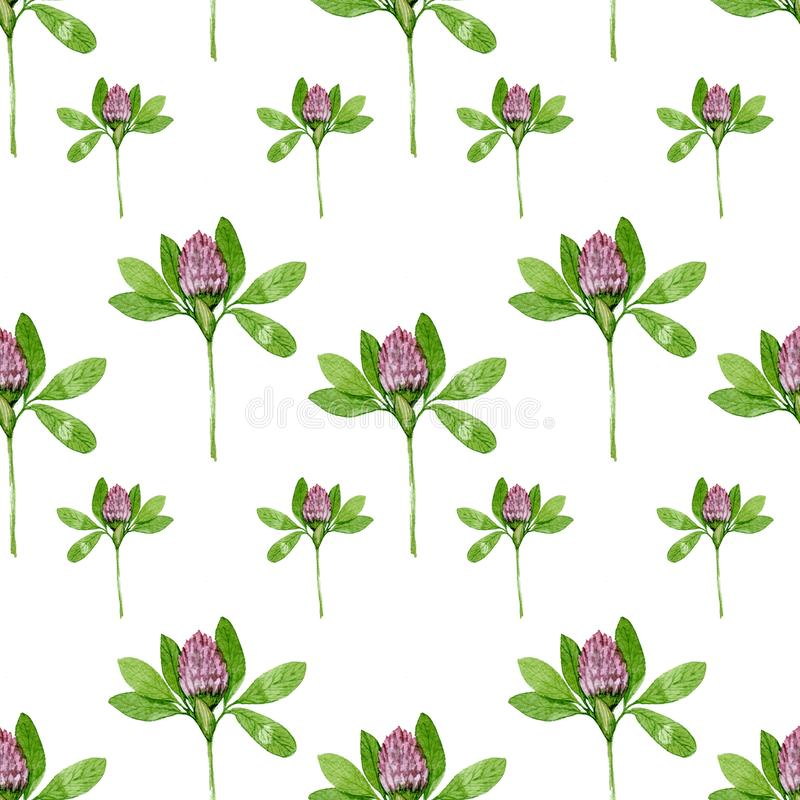 Seamless pattern of red clover. Flower watercolor pattern on white background vector illustration