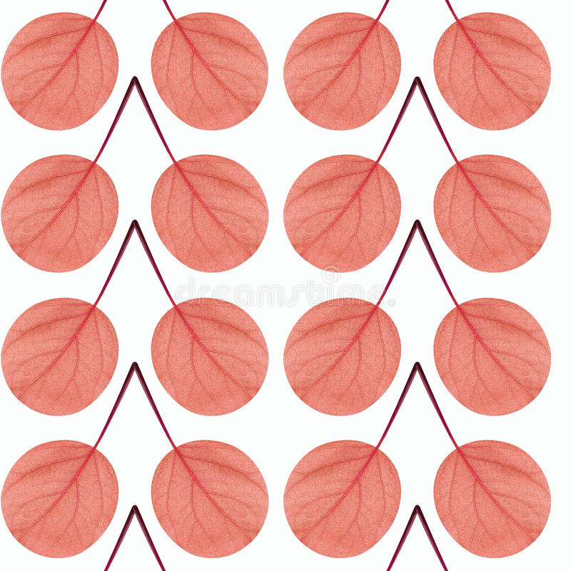 Seamless pattern of red leaves on a white background royalty free stock images