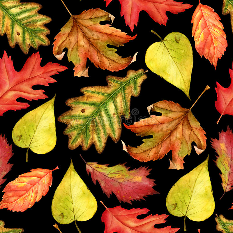 Seamless pattern with red, yellow and green-yellow autumn leaves on black background. Endless artwork hand-drawn. Floral stock image