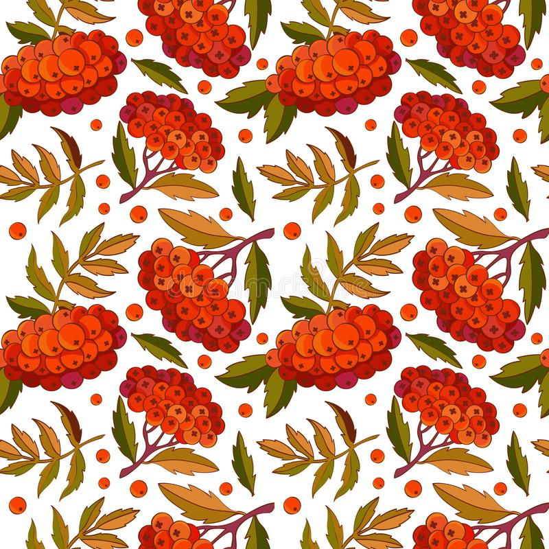 Seamless pattern rowan branch, leaves and red berries on white background in vector. Autumn design. Red forest berries. For design. Textiles, fabric, packaging royalty free illustration