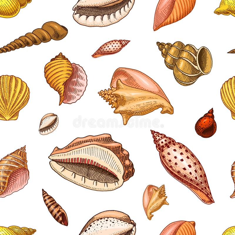 Seamless pattern shells or mollusca different forms. sea creature. engraved hand drawn in old sketch, vintage style royalty free illustration