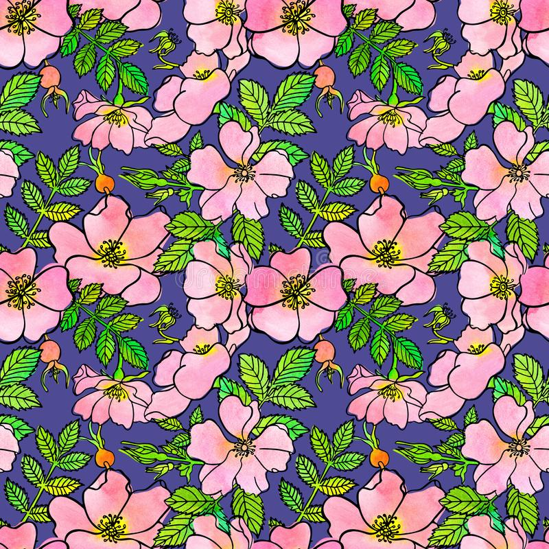 Seamless pattern of sketch dogrose with watercolor vector illustration