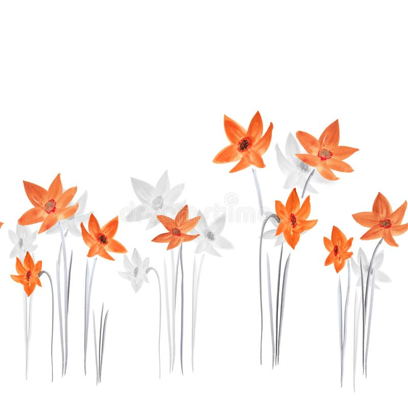 Seamless pattern of spring red and gray daffodils flowers on a white background. Watercolor stock photography