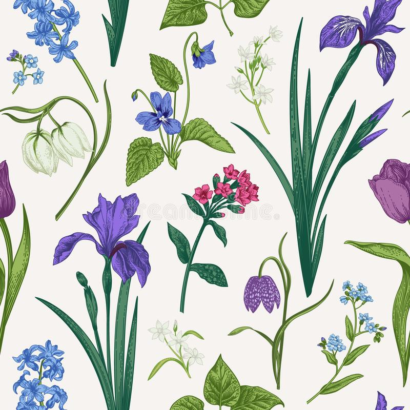 Seamless pattern with flowers and herbs. royalty free illustration