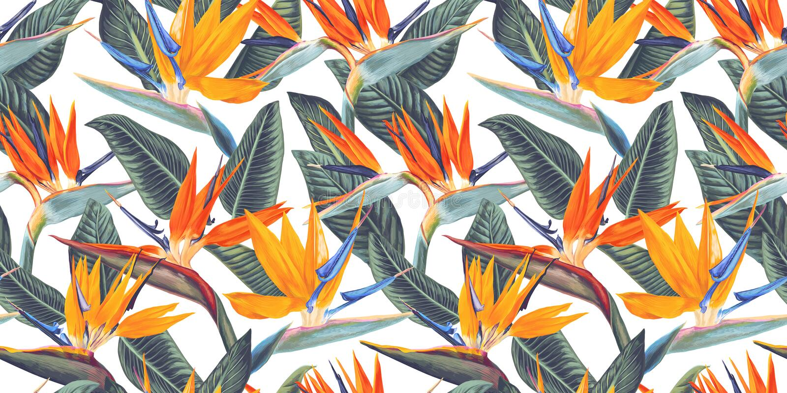 ,Seamless pattern with tropical flowers and leaves of Strelitzia, called crane flower or bird of paradise. royalty free illustration