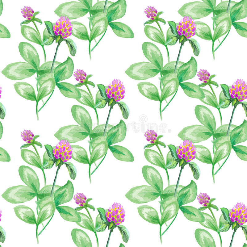 Seamless pattern Summer meadow flowers , clover flowers. Seamless pattern of clover. Flowers background, watercolor royalty free illustration