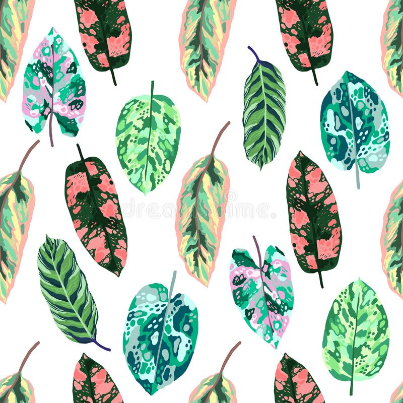 Seamless pattern Tropical leaves diffenbachia collection. Vector isolated elements on the white background. Leaf exotic motley royalty free illustration