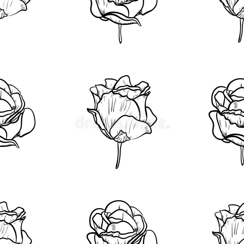 Seamless pattern vector Illustration of beautiful rose, drawing spring flower isolated on white background.  stock illustration