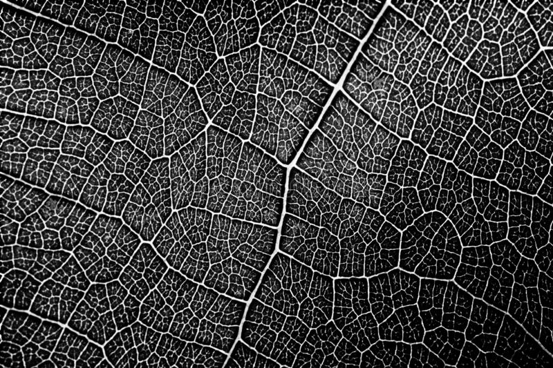 Seamless pattern of leaf texture in black and white stock image