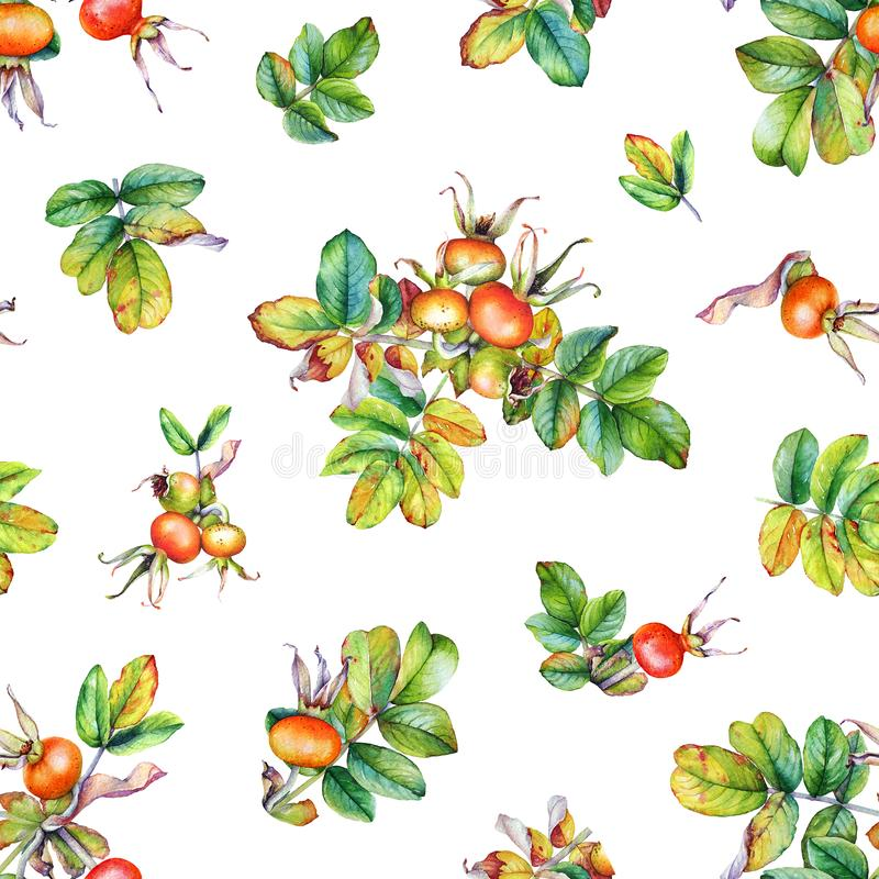 Seamless pattern with watercolor rose hip branches with berries vector illustration