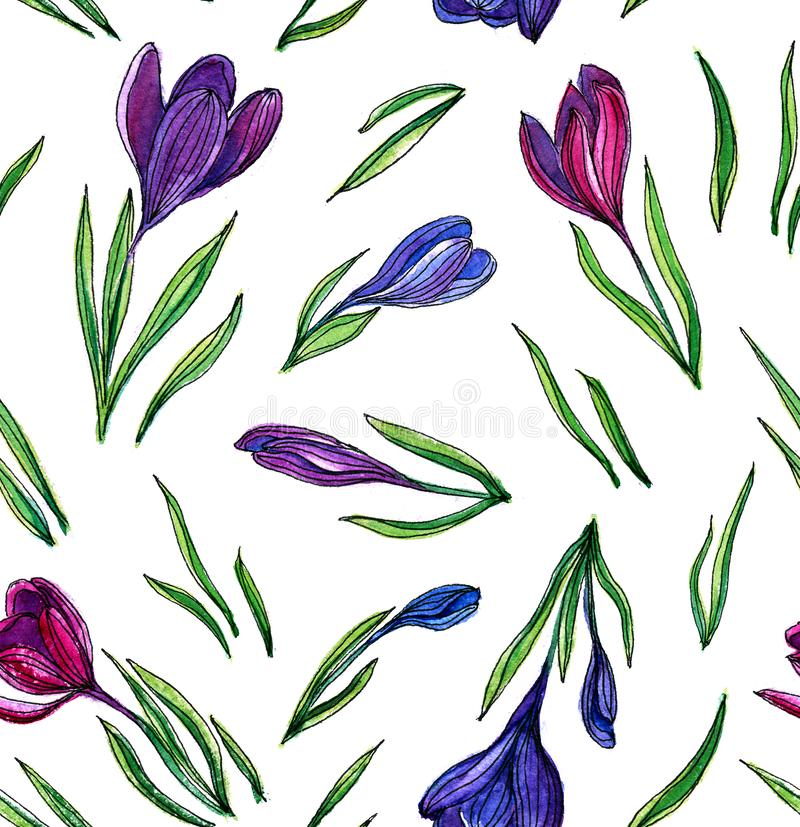 Seamless pattern of watercolor crocuses on a white background vector illustration