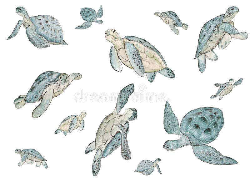 Seamless pattern with watercolor sea turtle on white background. Summer exotic print. stock image