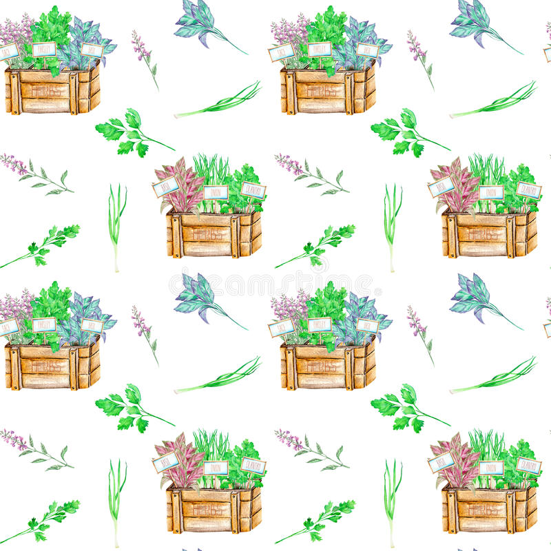 Seamless pattern with the watercolor spices spicy herbs in a wood boxes. Onion green, parsley, cilantro, sage and basil, painted on a white background royalty free illustration