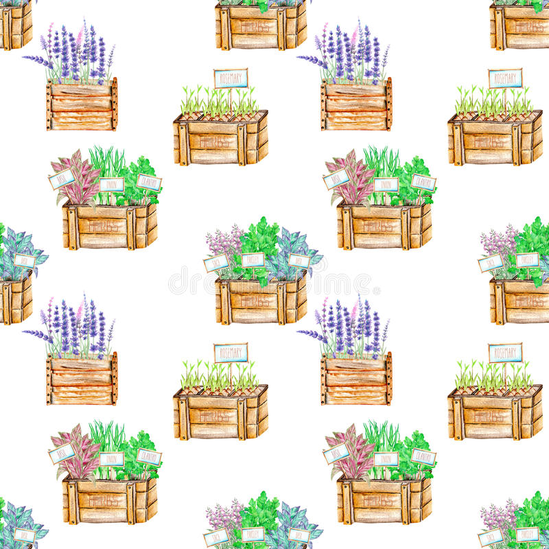 Seamless pattern with the watercolor spices spicy herbs in a wood boxes. Onion green, parsley, cilantro, sage, lavender and basil, painted on a white royalty free illustration