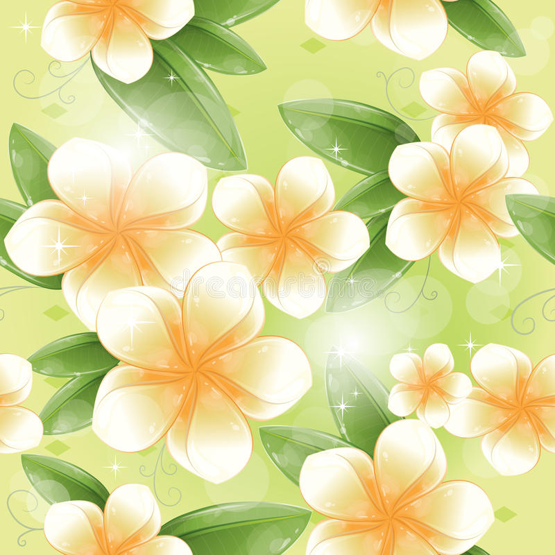Seamless pattern - White frangipani flowers stock illustration