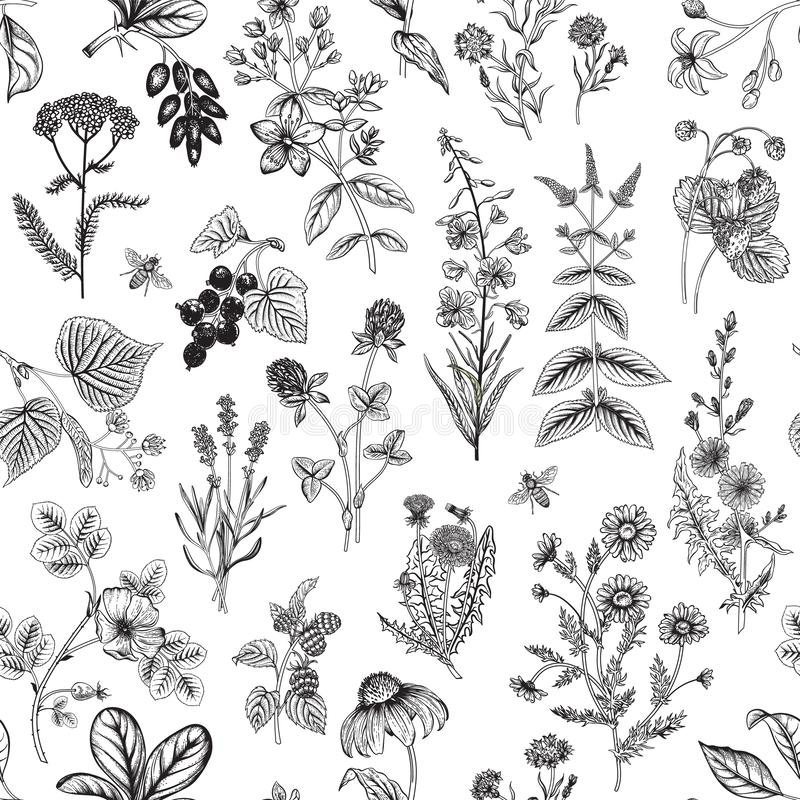 Seamless pattern with wild herbs. royalty free stock photo