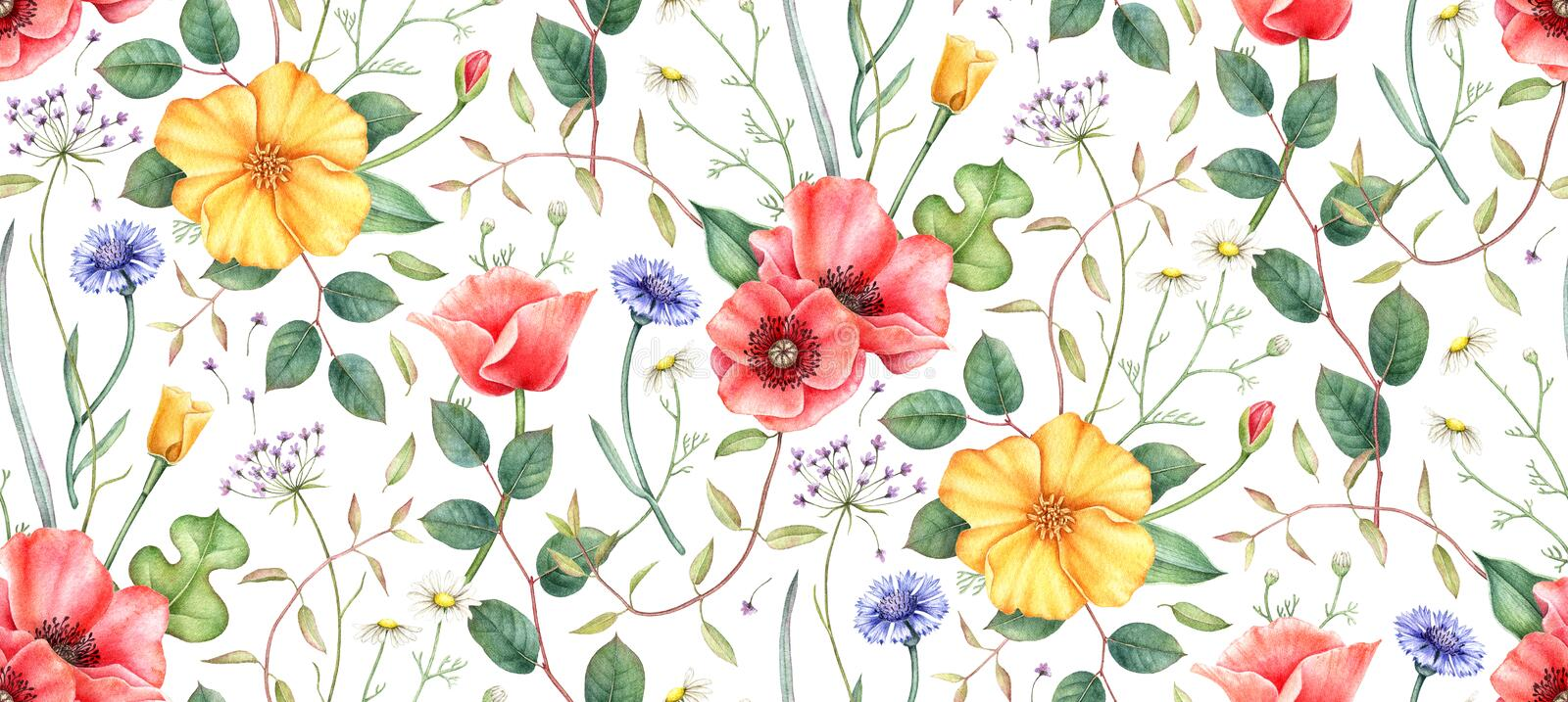 Seamless pattern with wildflowers and herbs. Hand drawn watercolor illustration. royalty free illustration