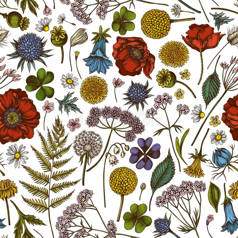 Free Seamless Pattern With Hand Drawn Colored Shepherd`s Purse, Heather, Fern, Wild Garlic, Clover, Globethistle, Gentiana Stock Image - 162228701